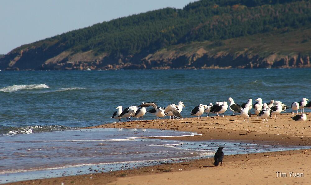 White birds and black bird by Tim Yuan