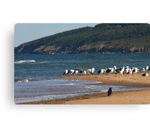 White birds and black bird Canvas Print