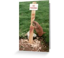 Clever Critter Greeting Card