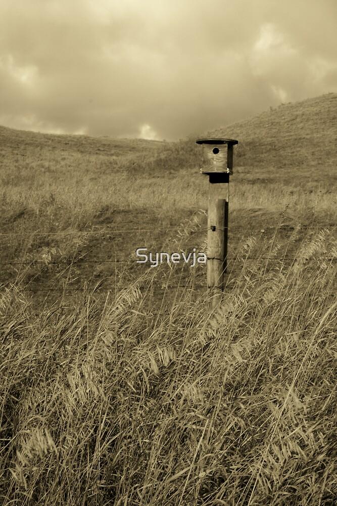 Little House on the Prairie by Synevja