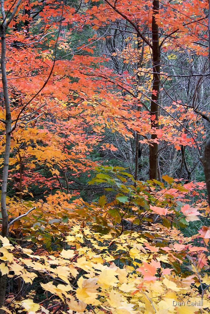 Fall Colors I by Dan Cahill