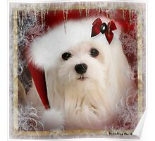 Snowdrop the Maltese at Christmas Poster