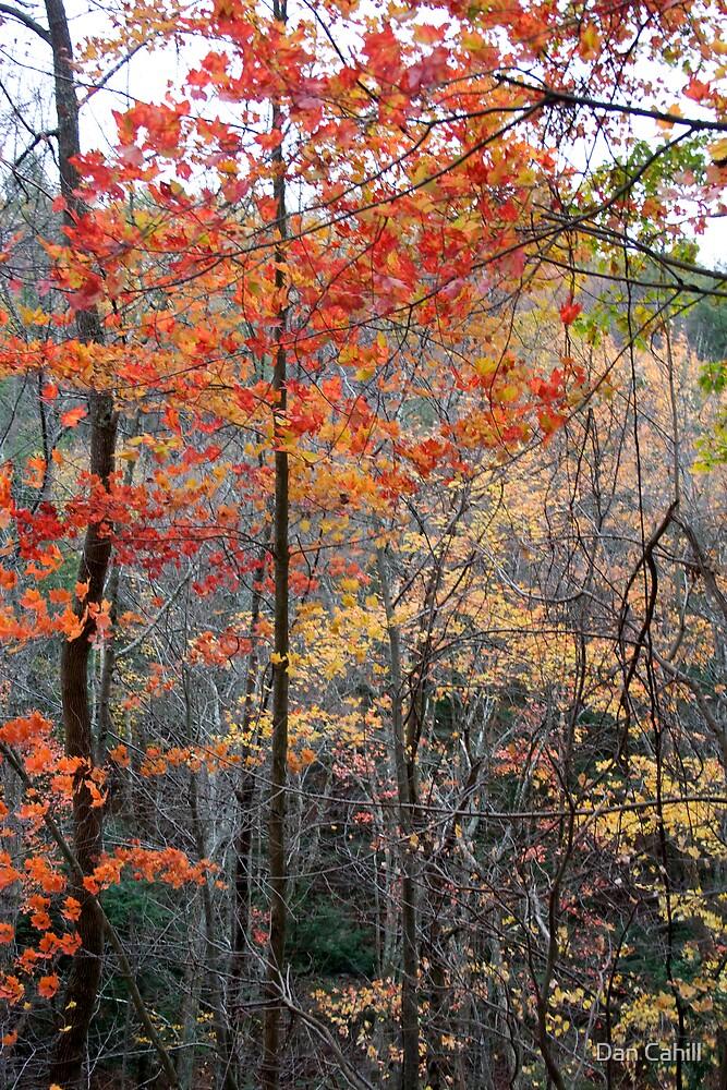Fall Colors II by Dan Cahill