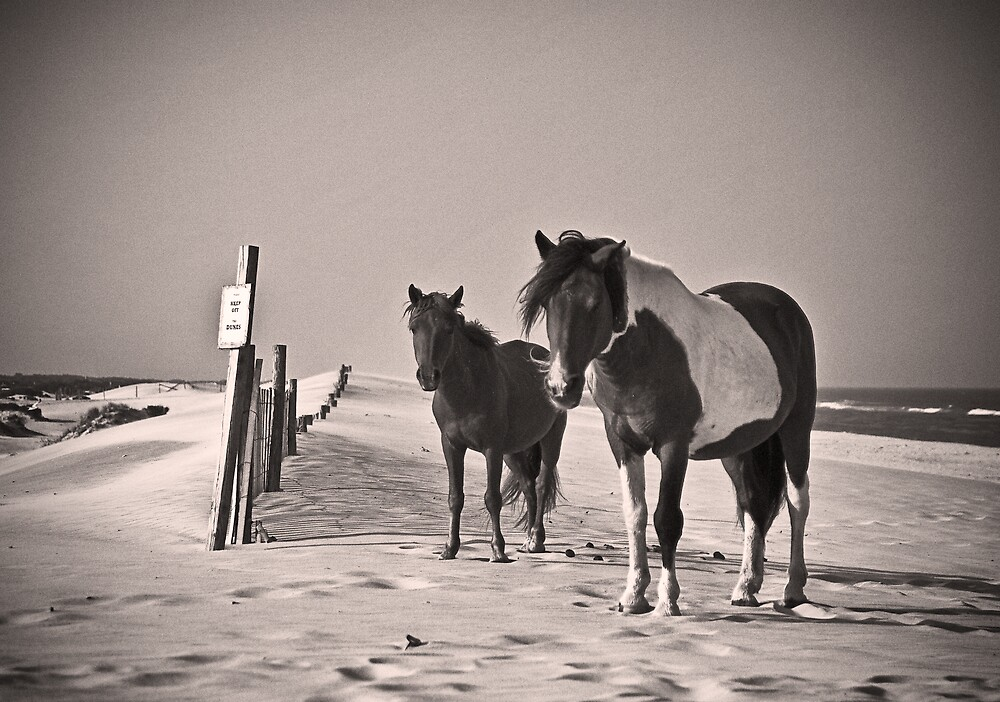 Please Keep off the Dunes by Michael Mancini
