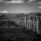 Flinders Fence by Evan Malcolm
