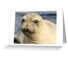 Northern Female Elephant Seal Greeting Card