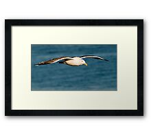 Seagull flight Framed Print