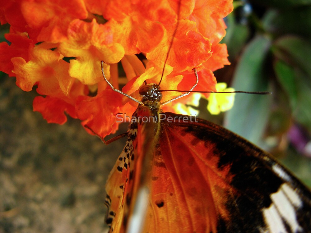 Beauty on a flower by Sharon Perrett