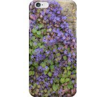 Wall of Purple Flowers iPhone Case/Skin