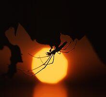 Spider by mymamiya