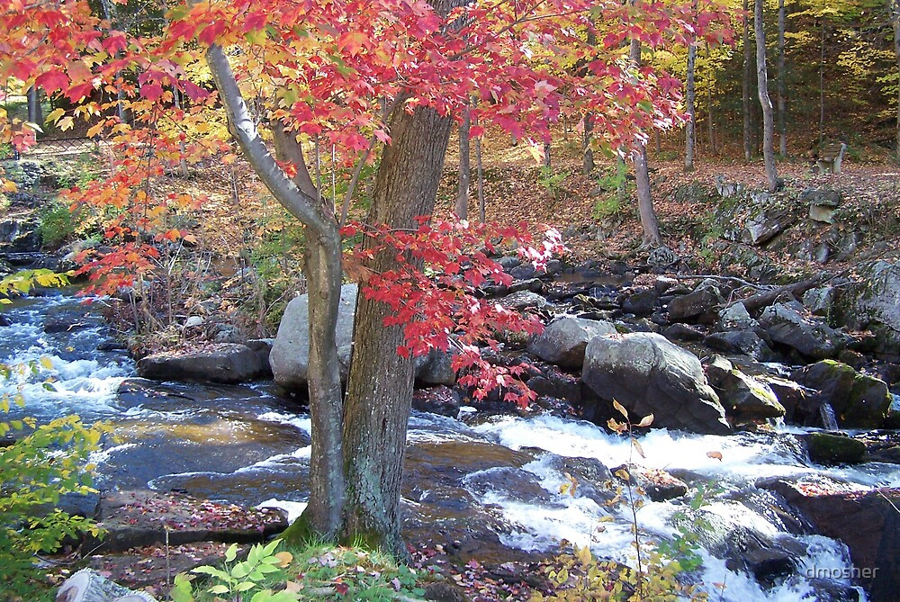 Fall in the Adirondacks by dmosher