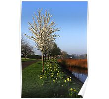 Spring Has Sprung Poster