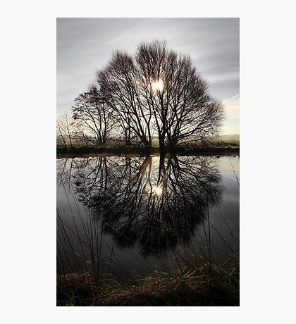 Tree Highlights Photographic Print