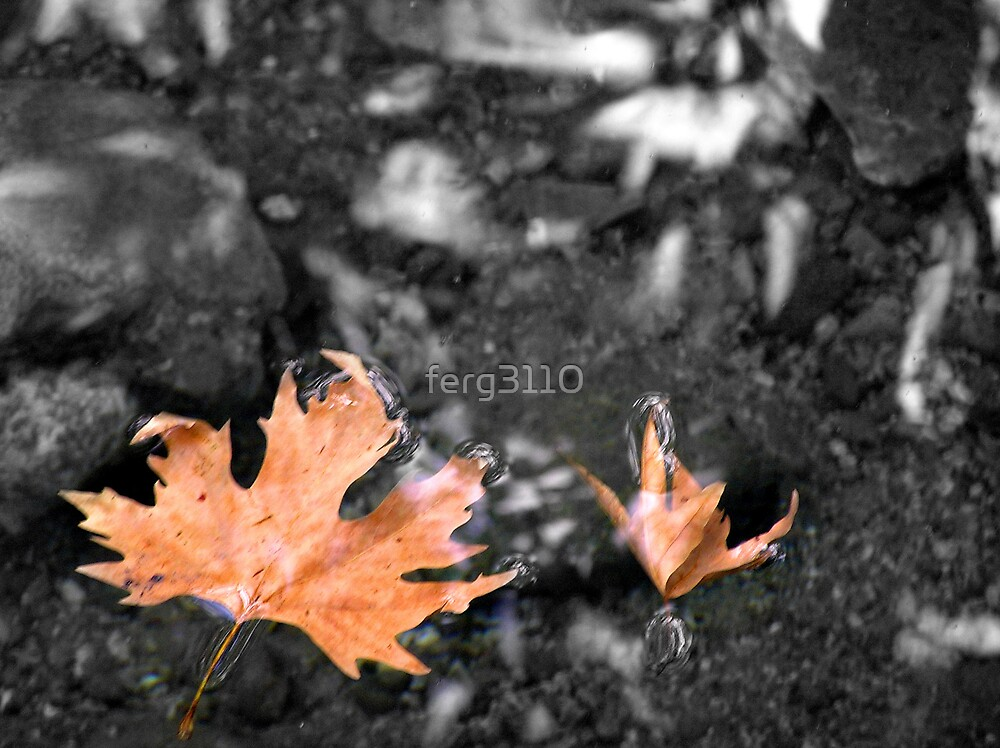 floating leaves by ferg3110