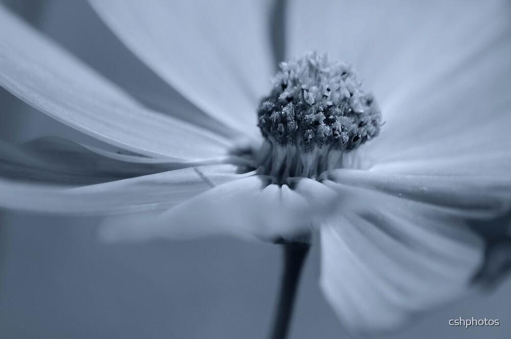 Blue Tint by cshphotos