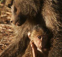 Baby Baboon by Steve Bulford