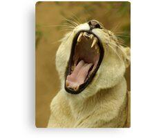 Just a Yawn, a very big yawn. Canvas Print