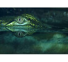Freshwater Crocodile. Photographic Print