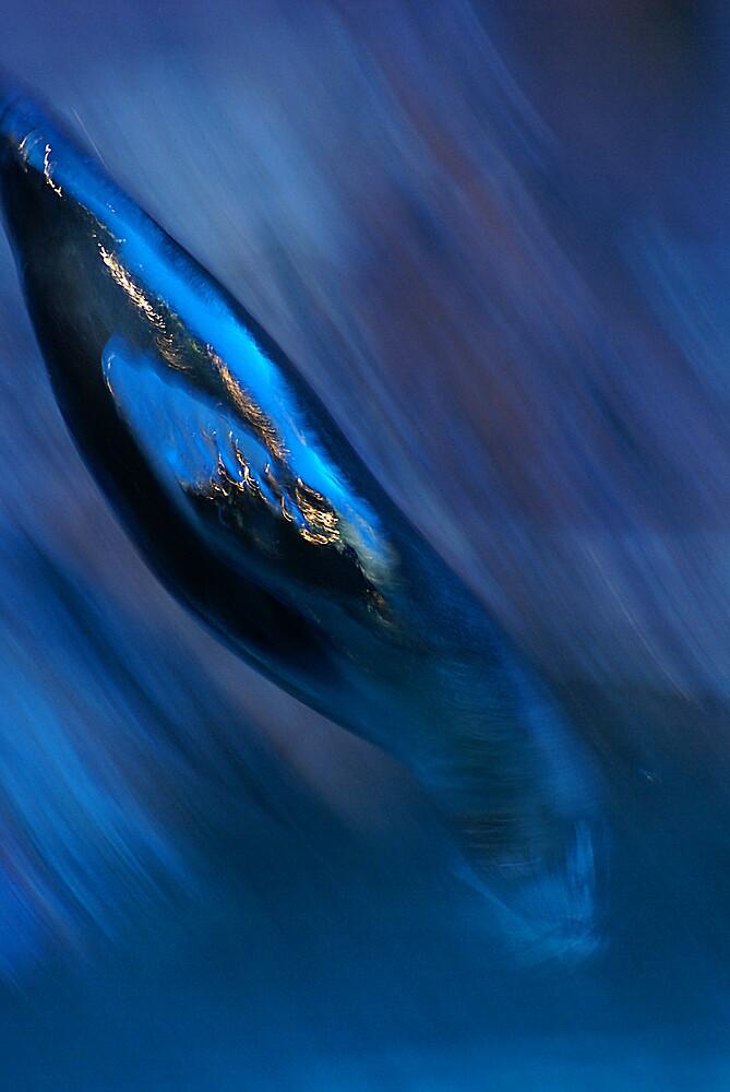 Seal by Steve Broadley