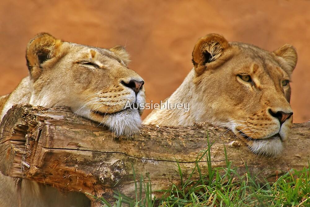 Sleepy Girls by Aussiebluey