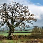 Lower Bruckland ~ Devon by Susie Peek