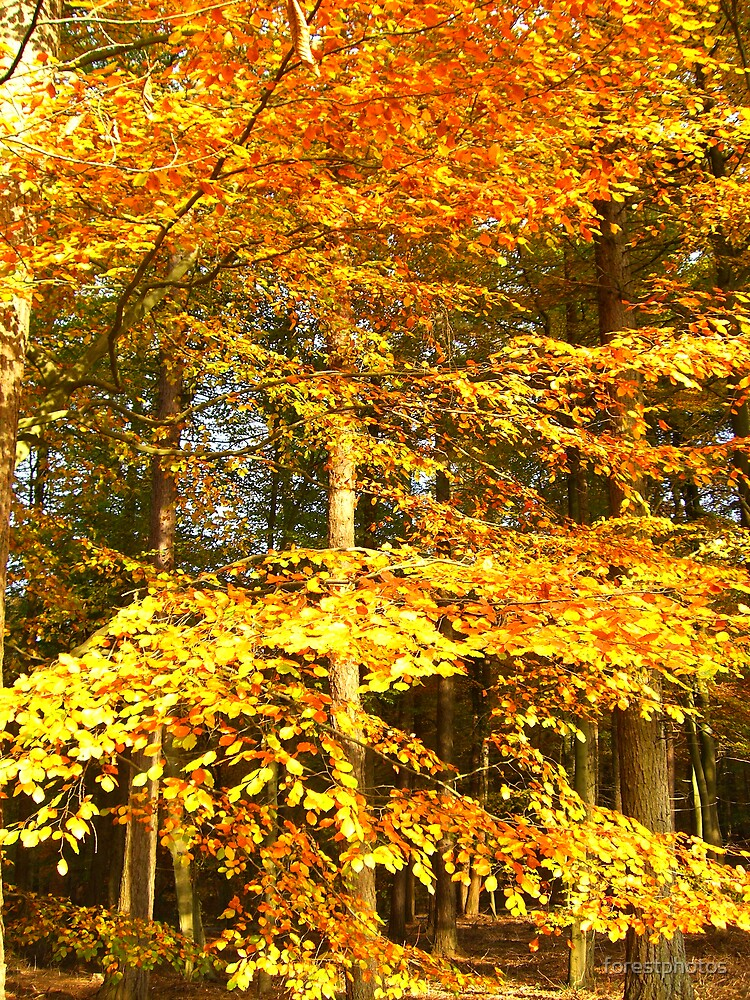 Golden leafs by forestphotos
