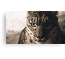 Cheetay Canvas Print