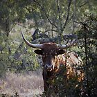 half-hidden longhorn by Brenda Loveless