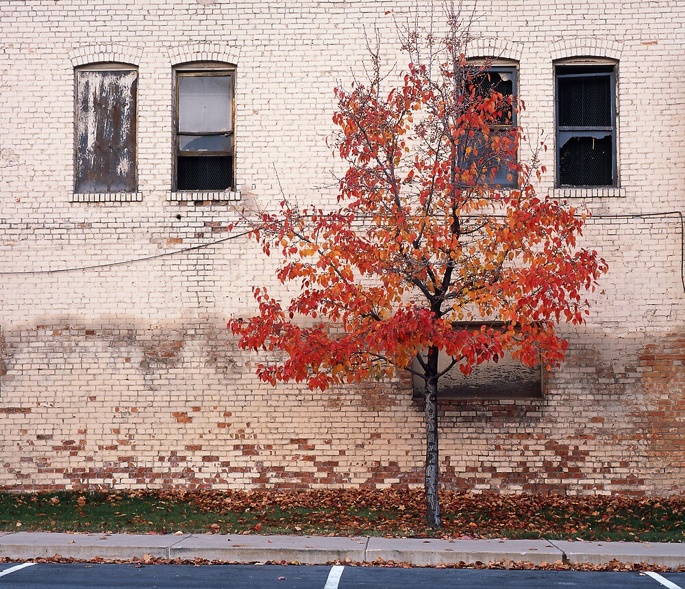 Urban Autumn by mymamiya