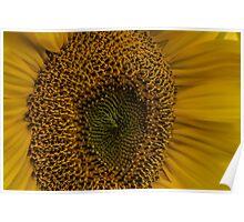 Sunflower - Macro Photography Poster