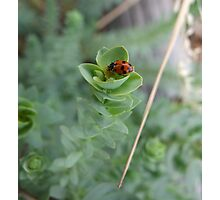 Mrs. Ladybird goes to the market Photographic Print