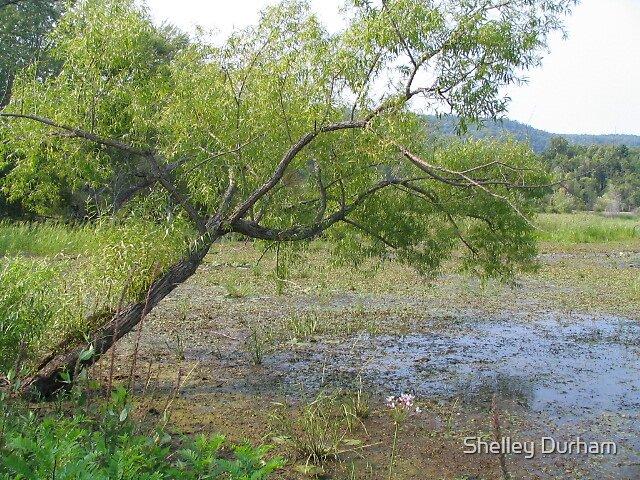 marsh tree by Shelley Durham