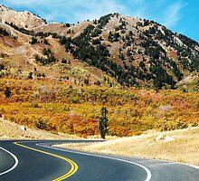 Autumn Drive by cshphotos