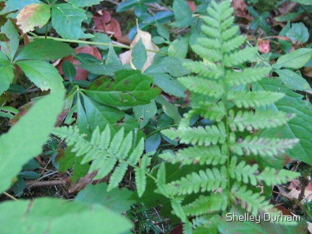 fern by Shelley Durham