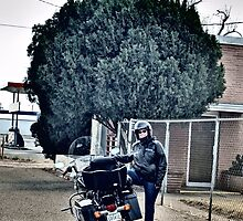 Norman Petty Studio Clovis, NM and Harley Ride by Marielle O'Brien