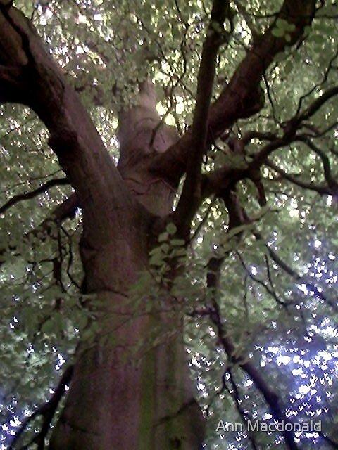 Tree by Ann Macdonald