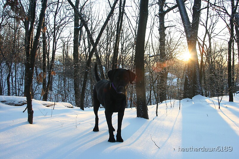 Snow Dog by heatherdawn6189