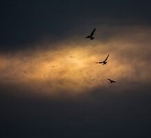 Three birds flying in the sunset by Pixie Copley LRPS