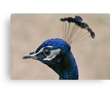 Peacock Crown Canvas Print