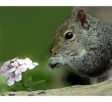 Chipmonk And Flower Photographic Print