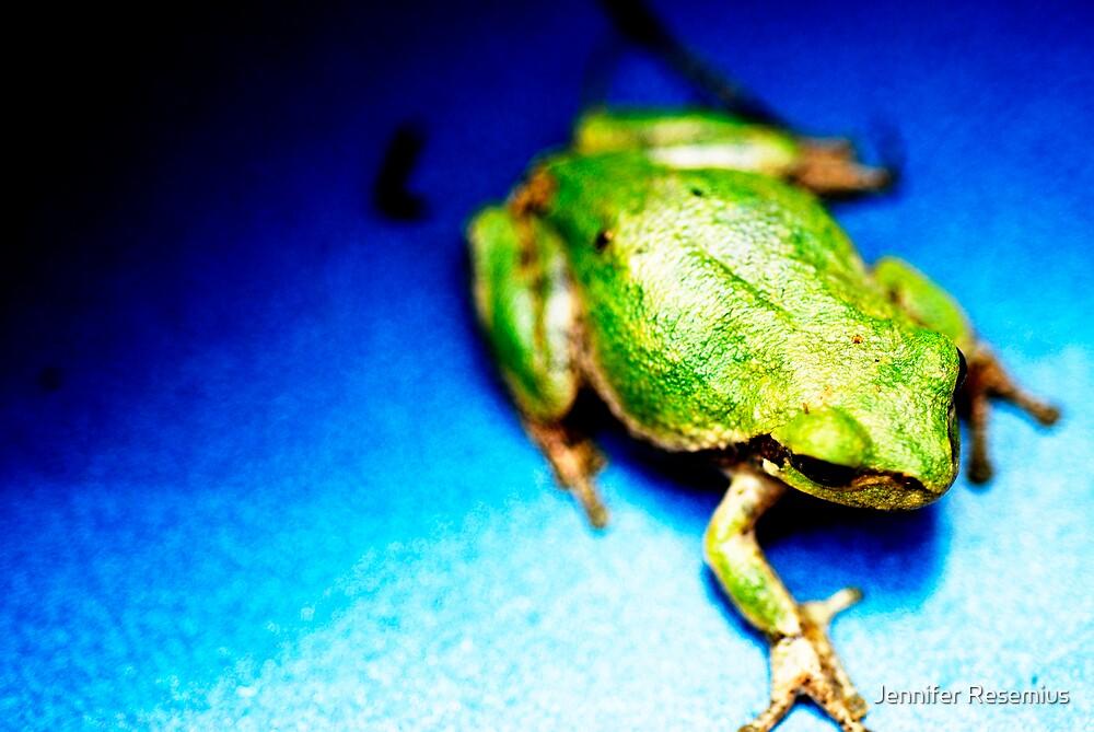 little green frog by Jennifer Resemius