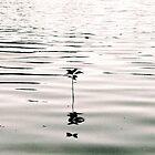 Solitude by Aeyeduh