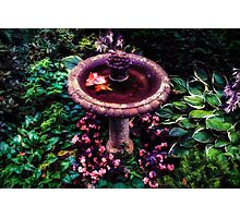 Bird Bath Photographic Print