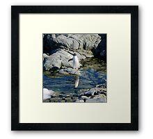 Reflecting Penguin Framed Print