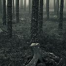 The Root by Anders Naesset