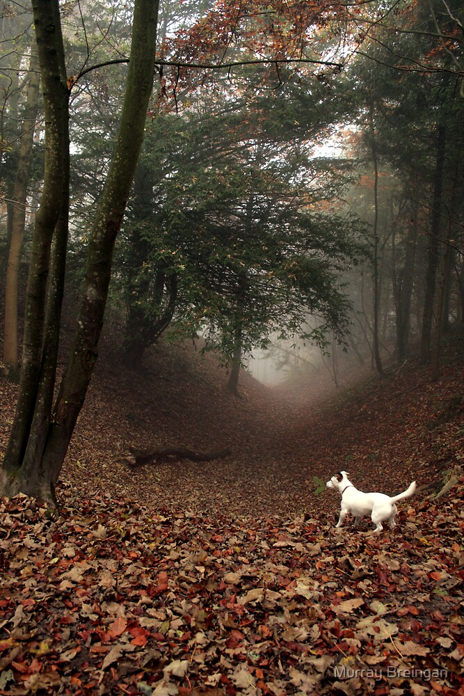 Doris in the Scary vale by Murray Breingan