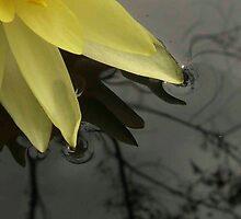 lotus1 by ewald schober