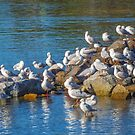 A Gathering of Gulls by Bette Devine
