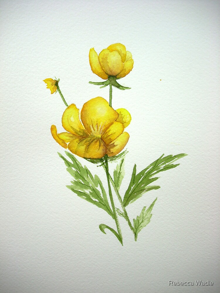 Little Buttercup by Rebecca Wadle