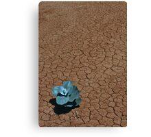 Desert Life Canvas Print